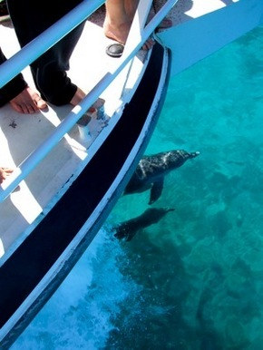 Pelican Charters - Attractions Perth