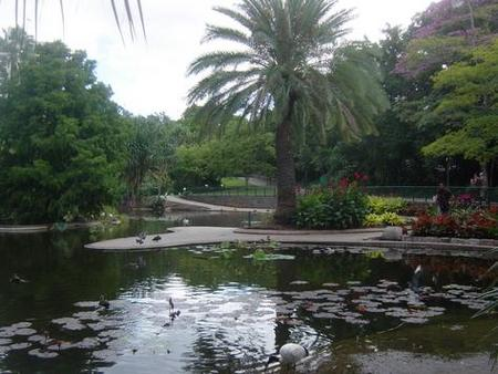 Brisbane City Botanic Gardens - Attractions Perth