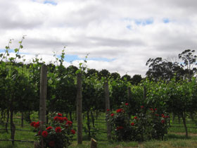 Manyara Vineyard - Attractions Perth