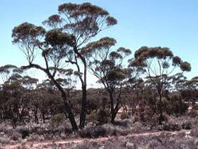Clements Gap Conservation Park - Attractions Perth