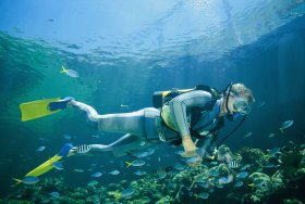 Kirra Reef Dive Site - Attractions Perth