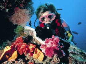 Cook Island Dive Site - Attractions Perth