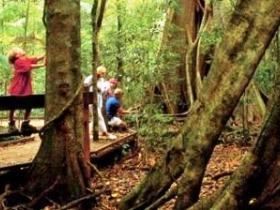 Mary Cairncross Scenic Reserve - Attractions Perth