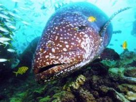 Lady Musgrave Island Dive Sites - Attractions Perth