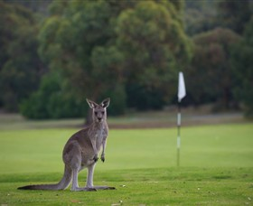 Anglesea Golf Club - Attractions Perth