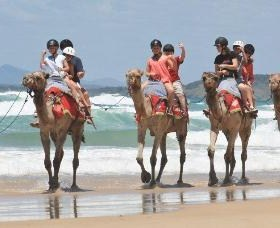 Camel Rides with Coffs Coast Camels - Attractions Perth