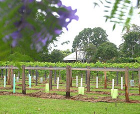 Douglas Vale Historic Homestead  Vineyard - Attractions Perth
