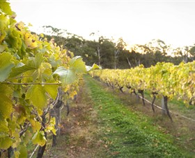 Harcourt Valley Vineyards - Attractions Perth