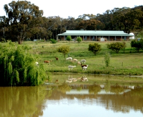 Clearview Alpacas - Attractions Perth