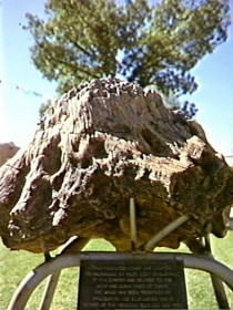 Fossilised Tree - Attractions Perth