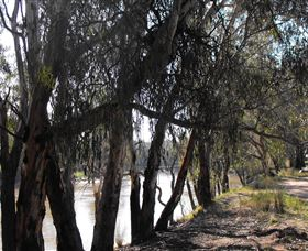 Mia Forest Drives Narrandera - Attractions Perth