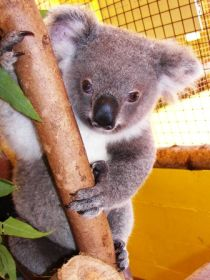 Cooberrie Park Wildlife Sanctuary - Attractions Perth