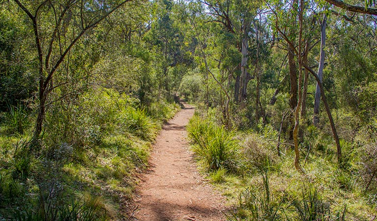 Mares Forest Creek walking track - Attractions Perth