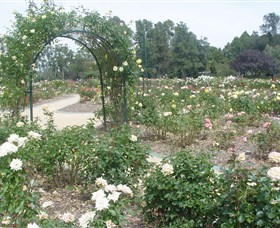 Victoria Park Rose Garden - Attractions Perth