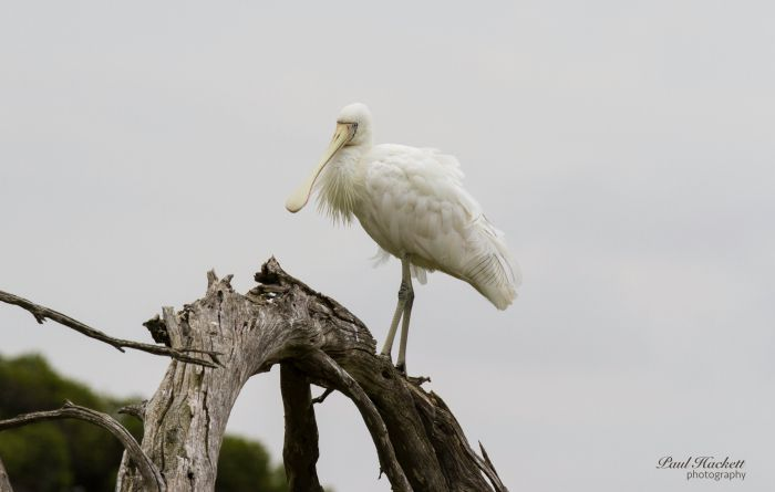 Melbourne Birding Tours - Attractions Perth