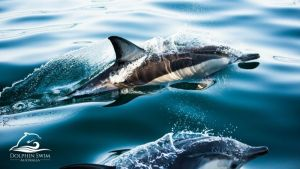Dolphin Swim Australia - Attractions Perth