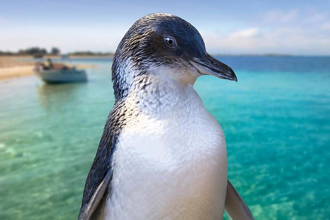 Full-Day Penguin Island  Fremantle Town - Attractions Perth