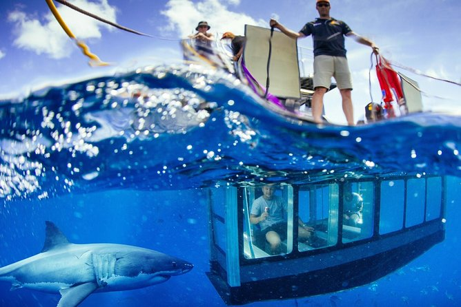 White Shark Tour with Optional Cage Dive from Port Lincoln - Attractions Perth