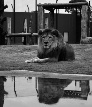 Hunter Valley Zoo - Attractions Perth