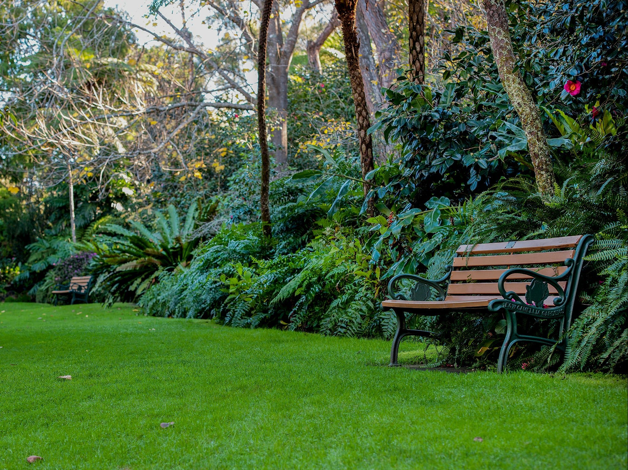 EG Waterhouse National Camellia Gardens - Attractions Perth