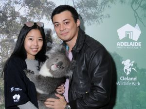 Cleland Wildlife Park - Koala Hold - Attractions Perth