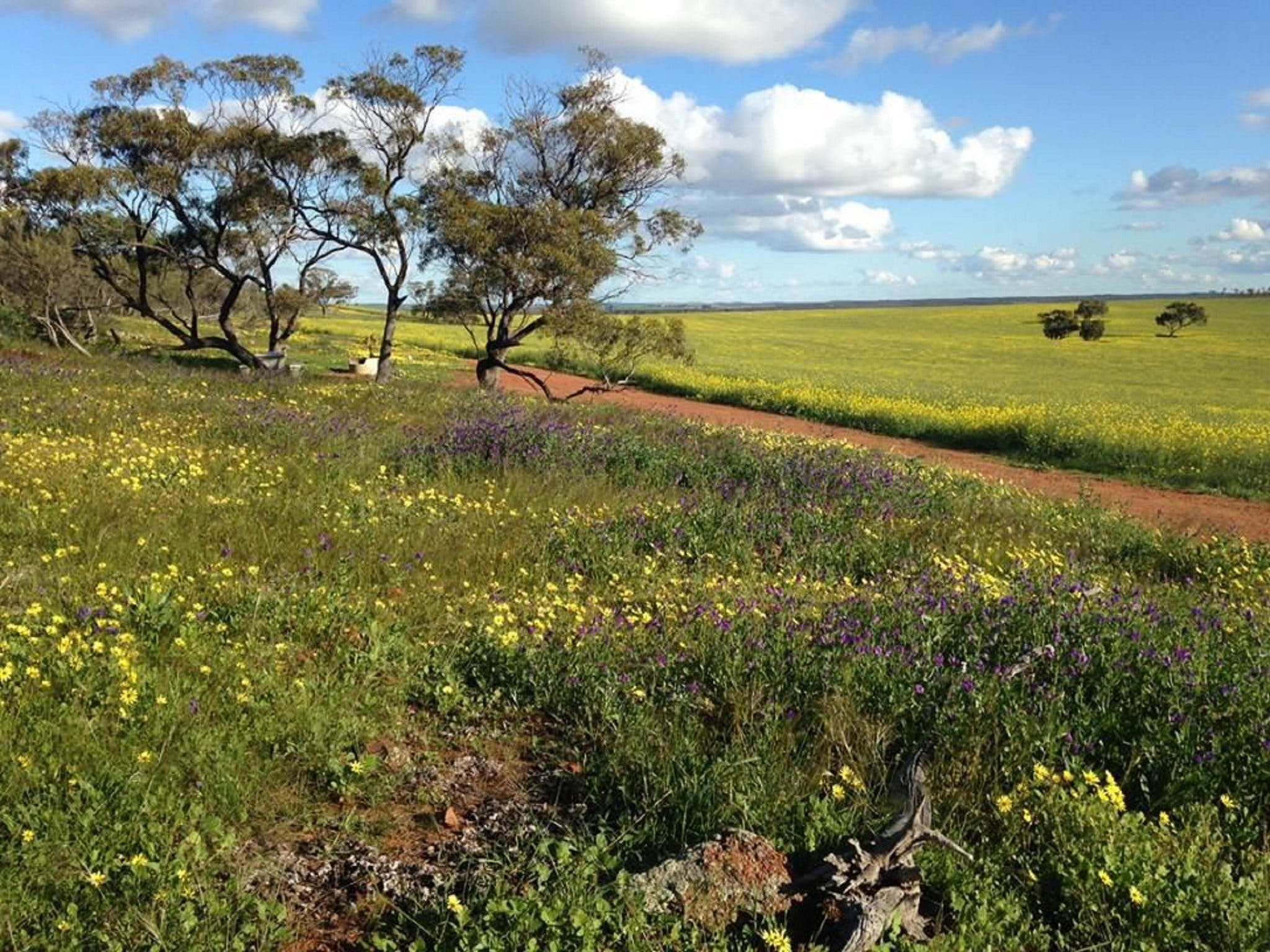 Coorow Wildflower Drive - Attractions Perth