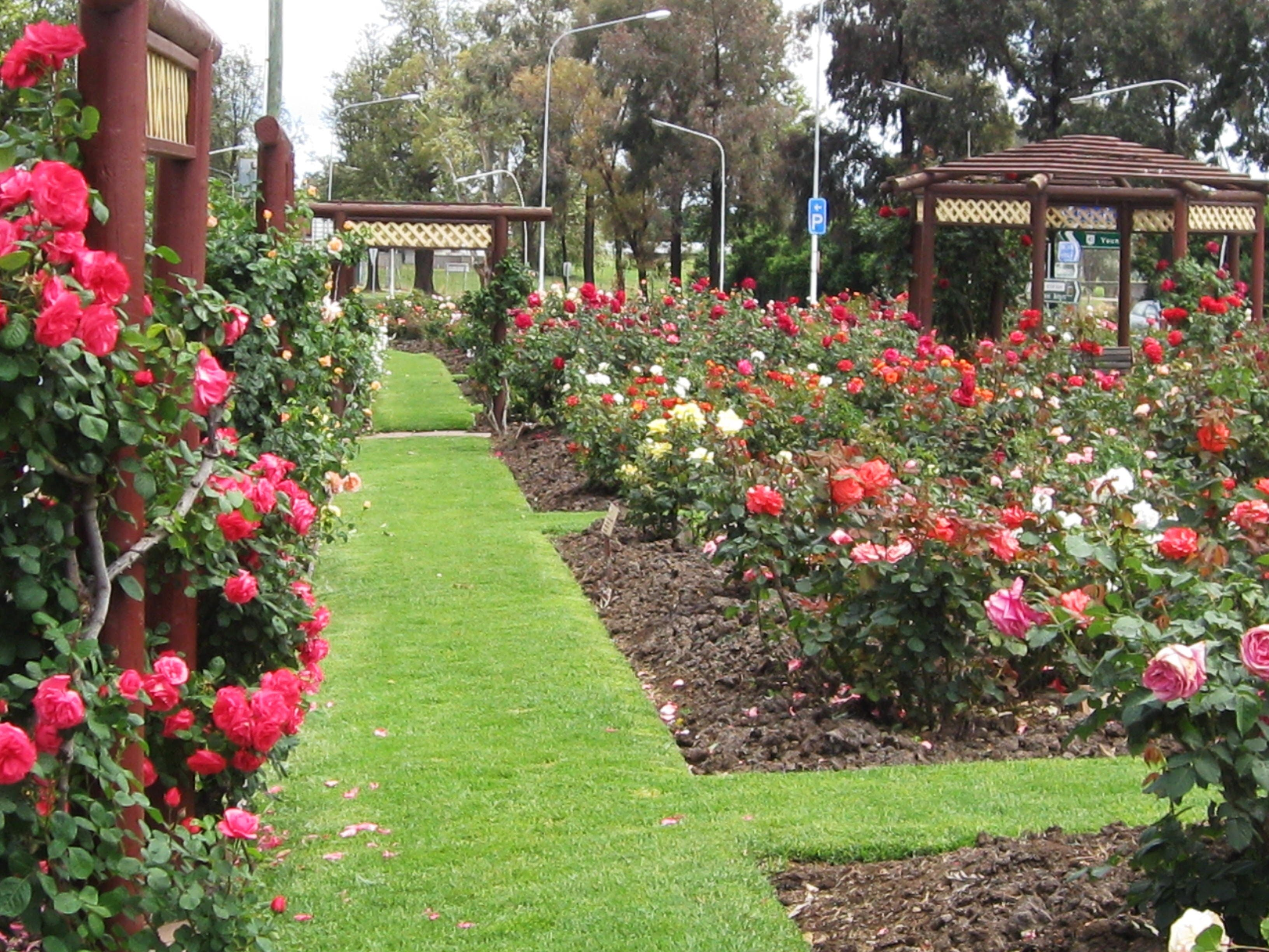 Cowra Rose Garden - Attractions Perth