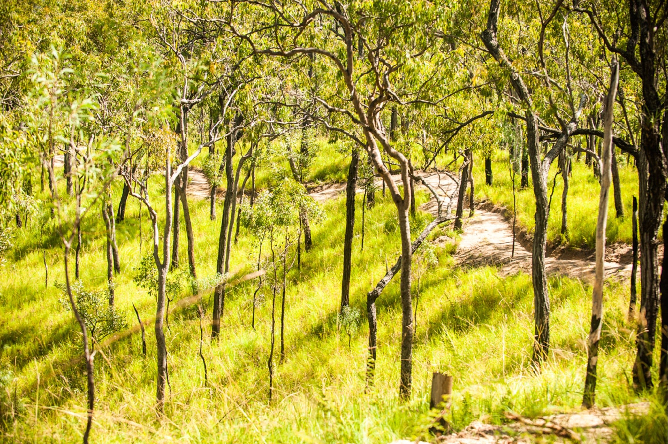 Davies Creek Mountain Bike Park - Attractions Perth