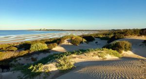 Shelly Beach Dune Walk Trail - Attractions Perth