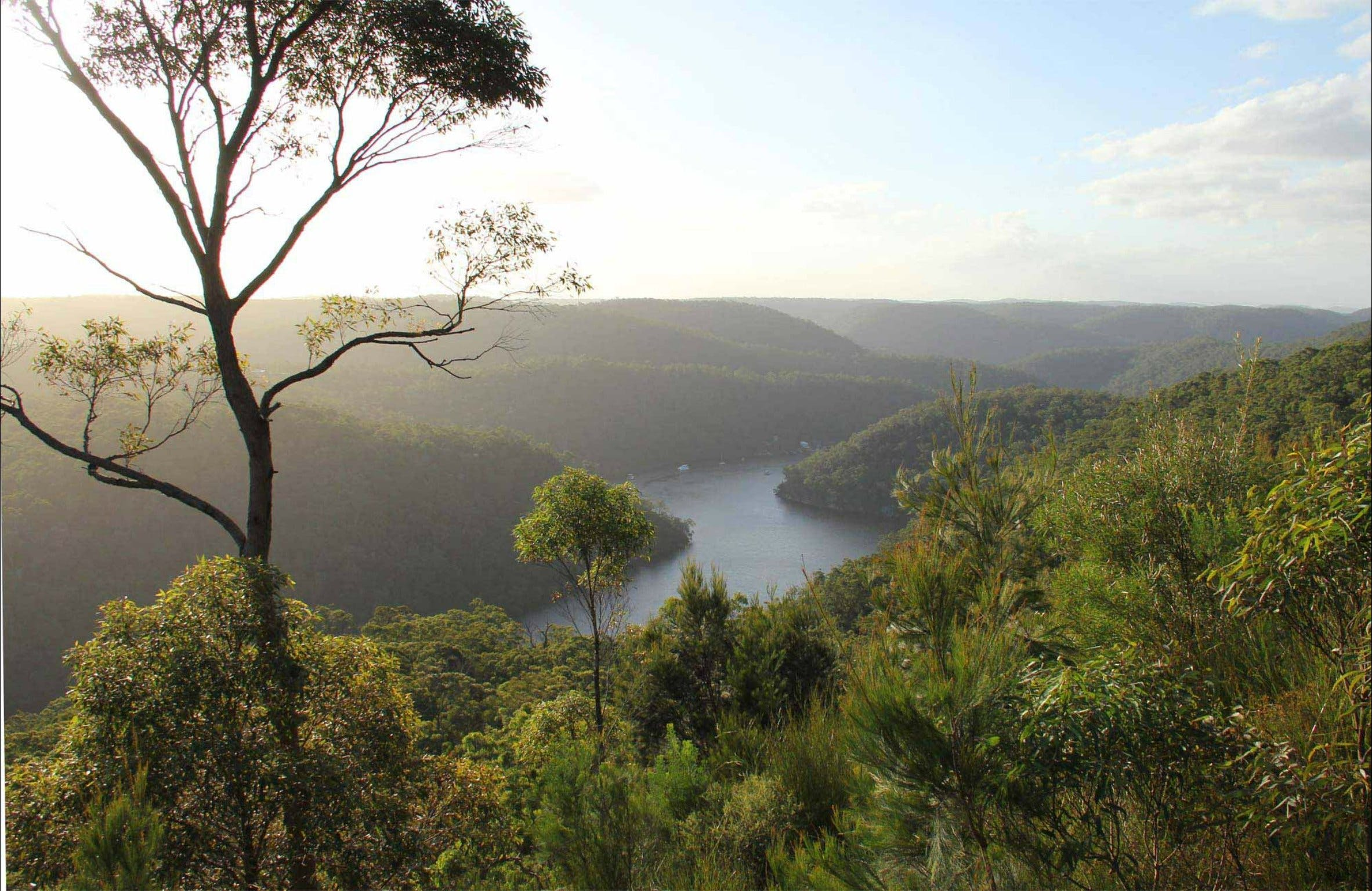 Great North walk - Berowra Valley National Park - Attractions Perth