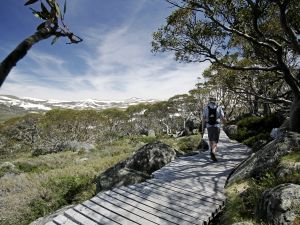 Snow Gums boardwalk - Attractions Perth