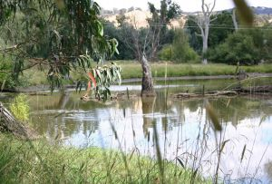 Tumut Wetlands - Attractions Perth