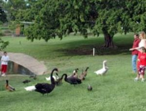 Anzac Park and Ululah Lagoon - Attractions Perth